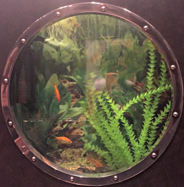 HIPrairies-Goldfish